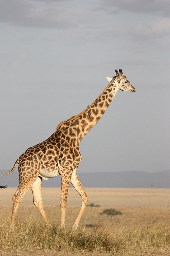 Safari-explore-nature
