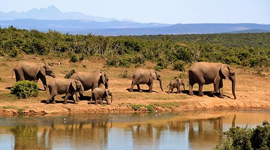 explore-safari-africa